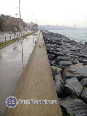 Коты на берегу Босфора.